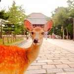 奈良公園の鹿と楽しく遊ぶ為の10のポイント