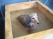 秩父のキャンプ場②お犬様の温泉も完備!スプラッシュガーデン秩父