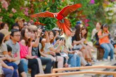 神戸のデートスポット⑤花と鳥!神戸花鳥園(神戸どうぶつ王国)