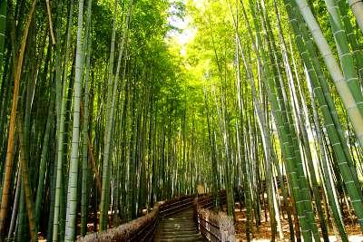 京都の心霊スポット③野ざらしの遺体が集まっていた風葬の地「化野念仏寺」竹林