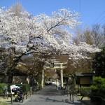 京都の神社巡り★地元民おすすめランキングTOP10