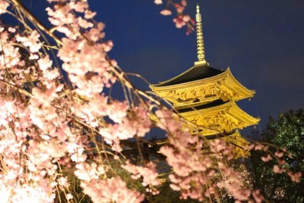 京都のお寺巡り★地元民おすすめランキングTOP10 東寺五重塔