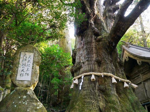 湯布院観光スポットランキング⑧樹齢1,000年以上!大杵社の大杉