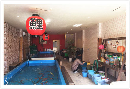 名古屋遊び場ランキング②金魚や鯉が釣れちゃう釣り堀「NEWココス」