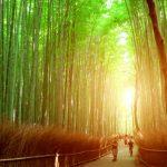京都は嵐山パワースポットランキング★地元民おすすめ10選