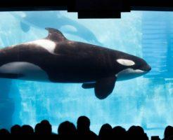 名古屋港観光スポットランキング④アカウミガメの繁殖日本一「名古屋港水族館」