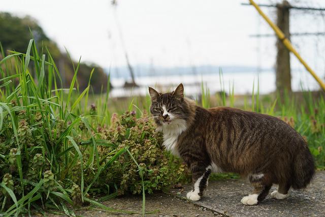 宮城県の猫島「田代島」観光前に知っておきたい10の事