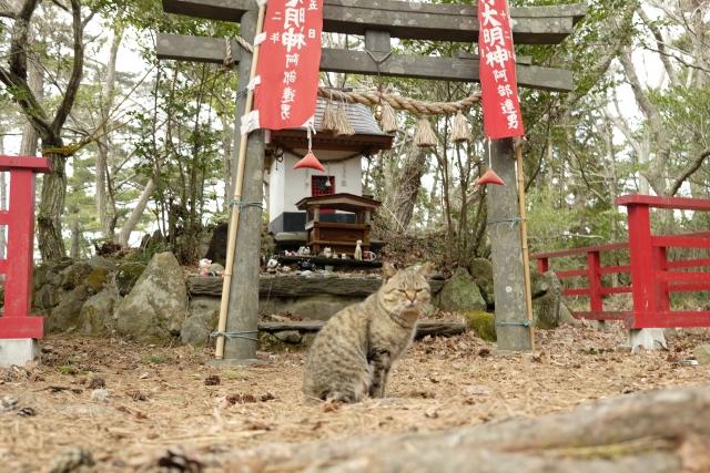 田代島内観光①猫神社