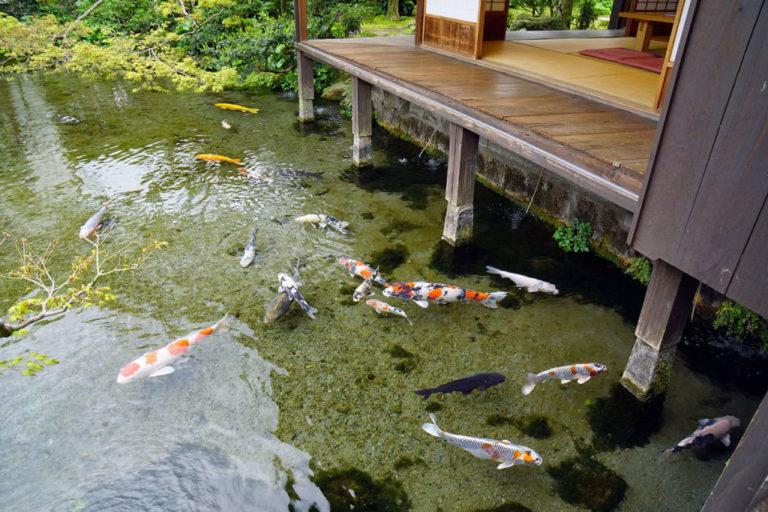 島原デートスポットランキング④心を落ち着けてゆっくりお喋りを!湧水庭園 四明荘