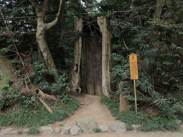 香取神社 三本杉