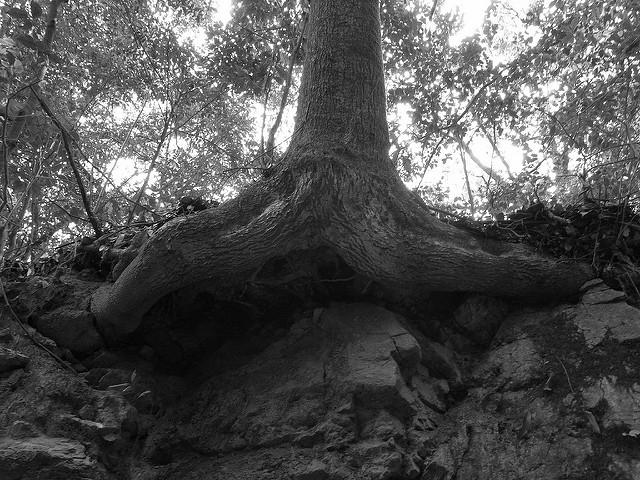 岩手県盛岡の最強危険心霊スポット⑧盛岡で有名な心霊スポット「愛宕山の裏山」