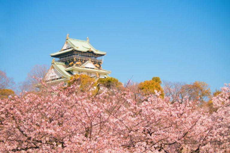 大阪城公園 満開の桜