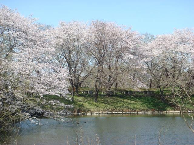 茨城県の桜の名所&見ごろ時期⑩親子で自然に親しむ!水海道あすなろの里