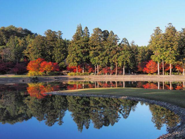 毛越寺 庭園 紅葉